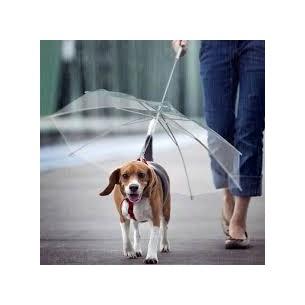 Guarda Chuva Pet  Com Coleira Sortido - Meu Pet